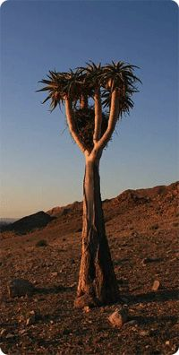 Richtersveld National Park, one of South Africas Peace Parks, the only true mountain desert Hiking Trails, Rafting, South Africa, Deserts, National Parks, Mountain, Trees, River, Orange