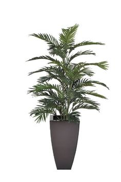 "Artificial Areca Palm in Dark Copper Zinc House of Silk Flowers,http://www.amazon.com/dp/B006TZC7L0/ref=cm_sw_r_pi_dp_xh5ltb1FSXM6W233.  52"" x 28"".   Good size. $69.00 & free ship.  In stock... ships in 2-3 days.  Plant size depends on height of lamp."