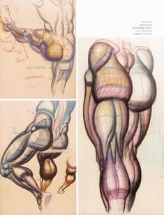 Burne Hogarth - Dynamic Anatomy (Revised and Expanded). Arm Anatomy, Gross Anatomy, Anatomy Drawing, Anatomy Reference, Art Reference, Body Sketches, Anatomy For Artists, Character Design Animation, Drawing Techniques