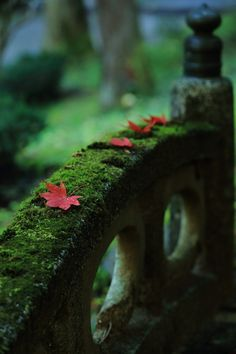 verde---➽viridi➽πράσινος➽green ➽verde➽grün➽綠➽أخضر ➽зеленый Beautiful Places, Beautiful Pictures, Beautiful Scenery, Nature Sauvage, Moss Garden, Ferns Garden, Autumn Garden, Garden Stones, In Natura