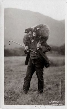 Shepherd with Crook bringing Home a Sheep Vintage Pictures, Old Pictures, Old Photos, Lord Is My Shepherd, The Good Shepherd, Alpacas, Farm Animals, Cute Animals, Wild Animals