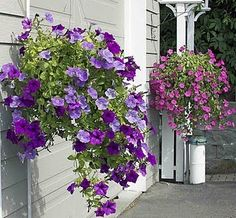 Alaskan aspire to have the perfect hanging baskets every summer!