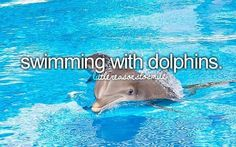 Just girly things. Swimming with dolphins.