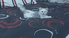 funny cat videos - cat playing compilation