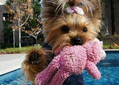 What Your Favorite Dog Breed Says About You via @PureWow