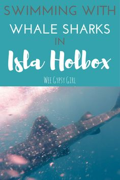 The Ethical Way to Swim with Whale Sharks: Isla Holbox, Mexico