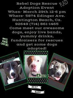 Rebel Dogs Rescue Click on pic for additional information ♥