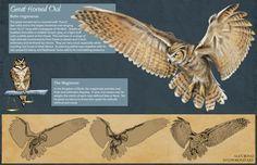Great Horned Owl Skeleton | Studio Bond · Concept Art, Visual Development, Illustration, & Fine ...