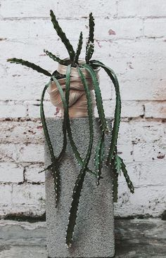 Coil Pottery Vessel zhu.ohmu North Melbourne Victoria Plant containers for cactus succulents Botanical