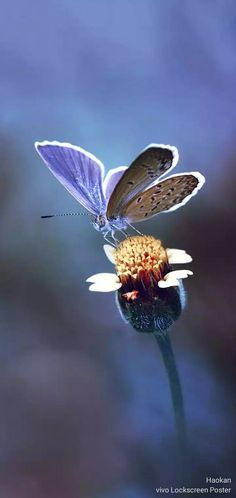 Madame Butterfly, Birds And The Bees, Lock Screen Wallpaper, Blue Brown, Moth, Insects, Cute Animals, Awesome, Nature