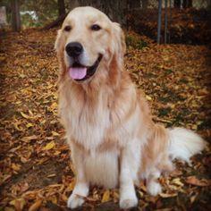 Fall fido fun! #cute #dog in #nature during the #fall season ! #adorable ! #woof!