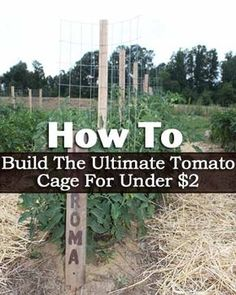 Looking for a low cost tomato support that actually works? You will love these inexpensive, easy to build homemade stake-a-cage tomato supports!