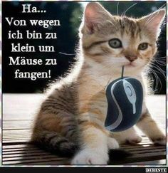 Besten Bilder, Videos und Sprüche und es kommen täglich neue lustige Facebook Bilder auf DEBESTE.DE. Hier werden täglich Witze und Sprüche gepostet! Warrior Cats, Funny Animals, Funny Dogs, Animals And Pets, Cute Animals, I Love Cats, Cute Cats, Cute Phrases, Facebook Humor