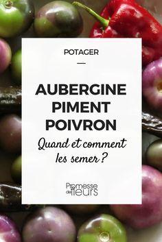 Aubergine, poivron et piment ont en commun un goût immodéré pour la chaleur. C\'est pourquoi, leur semis se fait à la maison, dès février si vous envisagez de les cultiver...