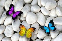 Fonds d'écran Pierres Lepidoptera Trois 3 Animaux