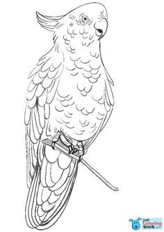 Rose Breasted Cockatoo Coloring Page Free Printable Coloring Pages For Free Printable Galah Cockatoo Coloring Pages Flamingo Coloring Page, Owl Coloring Pages, Free Printable Coloring Pages, Coloring Books, Galah Cockatoo, Nocturnal Birds, Types Of Colours, Pretty Birds, Wild Birds