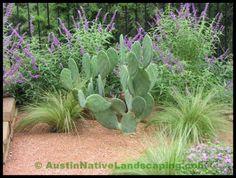 native texas landscapes | Texas_native_plants_landscape_contractors_landscape_designers.jpg