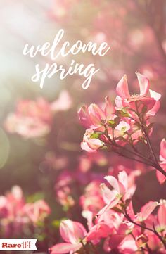 The flowers are blooming, the birds are chirping - spring is Happy Spring, Hello Spring, Spring Time, Cute Wallpapers, Wallpaper Backgrounds, Iphone Wallpaper, Spring Wallpaper, Christmas Wallpaper, Design Seeds