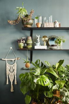 floating shelves and plants