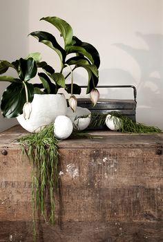 Daniella Witte — Gröna växter