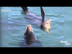 NatureNotes: Sealion #02 - YouTube