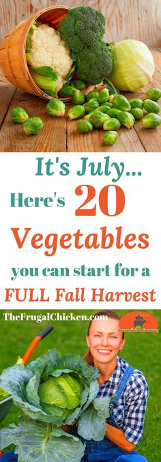 It might be mid-summer, but there's still plenty of vegetables you can start in your garden for a full fall harvest! Here's 20 that only take 90 days (at most) to mature! Gemüse 20 Vegetables You Can Start In July For A Full Fall Harvest Organic Vegetables, Growing Vegetables, Gardening Vegetables, Fall Vegetables To Plant, Growing Tomatoes, Winter Vegetable Gardening, Gardening For Beginners, Gardening Tips, Aquaponics System
