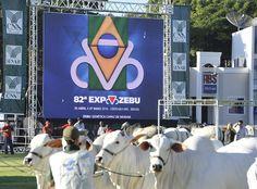 Genética zebu valorizada e desafios da pecuária movimentam a 82ª Expozebu