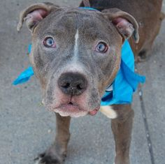 TRAFFIC- A1052345 1YR 7MNTH OLD BABY BOY!! LOOK AT THAT FACE N THOSE HEART PIERCING EYES, WHAT A DOLL:) 2 B KILLED 2NIGHT 10/4/15 OR EARLY 2MORROW MORNING! TERRIFIED, HEARTBROKEN N FEELING COMPLETELY ABANDONED NOW, ALL ALONE SCARED N DUMPED HERE 2 B KILLED! WE R THIS SPECIAL LIL ANGELS ONLY VOICE N HOPE 4 SURVIVAL OUT OF HERE, ALIVE!! WONT U PLZ HELP MAKE THIS BEAUTIFUL LIL BOYS LAST WISHES COME TRUE? LOVE LIFE N A 4EVER HOME:))) PLZ DONT WAIT/HESITATE, THIS PLACE WILL KILL HIM SOON!! P…