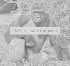 RIP Harmabe