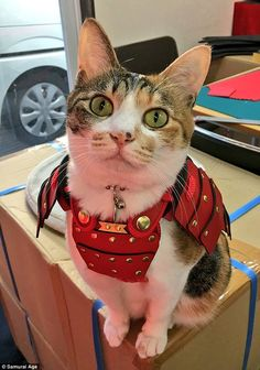 Japanese company crafts samurai armor for cats and dogs Cat Armor, All Types Of Cats, Samurai Armor, Cat Aesthetic, Cute Cats And Dogs, All About Cats, Guinea Pigs, Japanese Art, Dog Cat