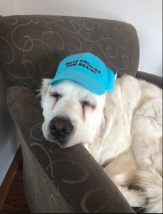 Our dogs in the office always bring their A game and love representing our clients. Anya decided to show off her hat today! The Office, Gratitude, Advertising, Bring It On, Social Media, Hats, Creative, Recipes, Be Grateful
