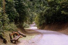São Paulo - Horto Florestal - Pesquisa Google