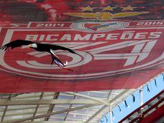 o SL Benfica devia ir para Óbidos onde...