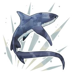 Thresher Shark by stormful