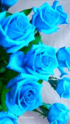 Beautiful Flowers Wallpapers, Beautiful Rose Flowers, Rare Flowers, Exotic Flowers, Amazing Flowers, Flower Phone Wallpaper, Flower Wallpaper, Flower Images, Types Of Flowers