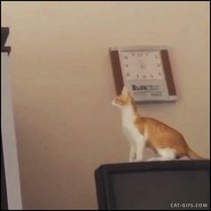 Captioned CAT GIF • Cat jump fail. Presumptuous  fails. I can do it Ho shit I can't!