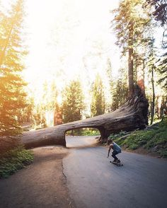 """When life hands you an open road and a fallen tree tunnel, you hop on your longboard — in leather booties. Anthony Garcia (@anthaang) snapped this sun-drenched shot of his girlfriend Rebecca Granados (@reeebecky) in Sequoia National Park: """"One of the most underrated national parks in California,"""" he calls it. """"Not only did we catch a beautiful sunrise that day, but we managed to skate, jump inside a swimming hole and encounter two beautiful waterfalls I never even knew existed."""" Follow along…"""