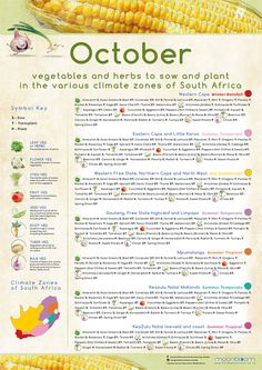Growing your own organic delicious food is most rewarding! These educational Moonbloom posters will help guide you. Planting Vegetables, Vegetable Garden, South Africa Honeymoon, Grow Your Own, Delicious Food, Plant Leaves, Herbs, Gardening, Posters