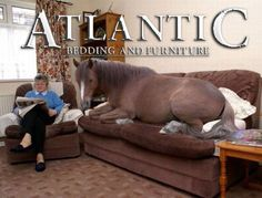 Truckload of Polo inspired sofa's just in! - http://abfvirginiabeach.com/truckload-of-polo-inspired-sofas-just-in/