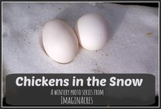 A wintery photo series from Imaginacres