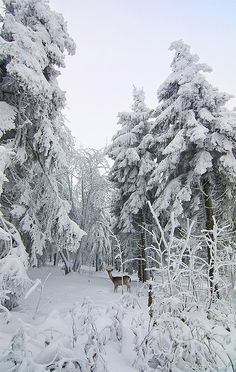 """""""+ first_snow_of_the_season"""" by david.richter on Flickr - A Snowy Scene In Germany"""