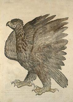 splattergut:  Aguila Icones animalium Conrad Gessner,1553