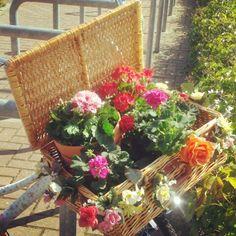 Bloemen voor het leukste straatje in Oosterhout. Heuveleind.