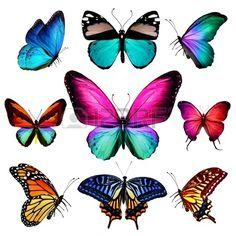 papillon: De nombreux papillons qui volent, isol? sur fond blanc Banque d