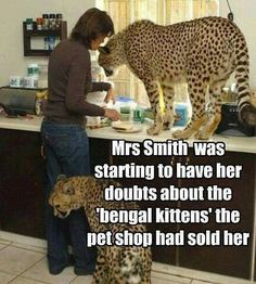 """""""Mrs Smith was starting to have her doubts about the 'bengal kittens' the pet shop had sold her."""""""