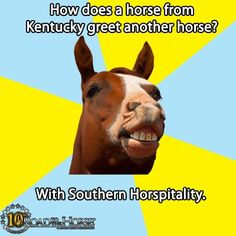 kentucky humor | How does a horse from Kentucky greet another horse? With Southern ...