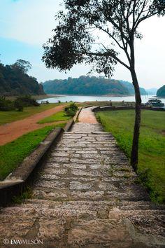 My way- at Periyar Tiger reserve, Thekkadi, Kerala, India