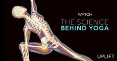 Take a journey into the Scientific research behind the benefits of Yoga in this free-to-watch UPLIFT film. Vinyasa Yoga, Bikram Yoga, Kundalini Yoga, My Yoga, Yoga Inversions, Meditation Benefits, Yoga Benefits, Yoga Meditation, Yoga Fitness
