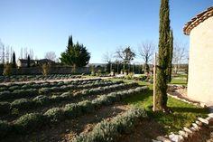 provencal