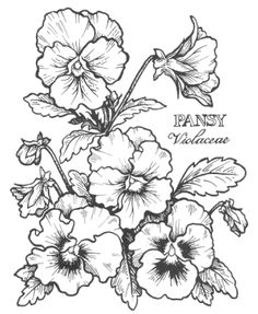 digital pansy stamp - Google Search